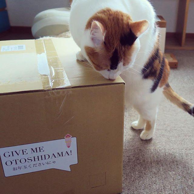 大晦日、年明け前ギリギリの注文だったのに @loveandco_coffee さんから1月3日にもう届いたよ!届いた箱から何かを感じるらしいあんみつさん。#lovemecoffee #loveandcoffee #ねこ部 #猫 #cat #catstagram #catsofinstagram #calico #ニャンスタグラム #三毛猫 #ふわもこ部 #あんみつさん